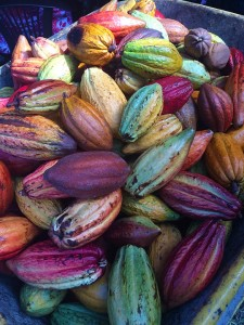 cocoa-pods-1424219_960_720