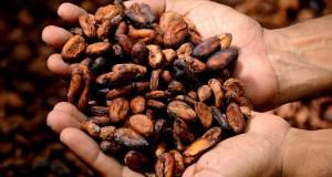 cacao-hands